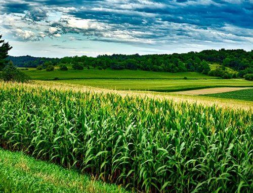 Corn and Soybean ELISA protocols